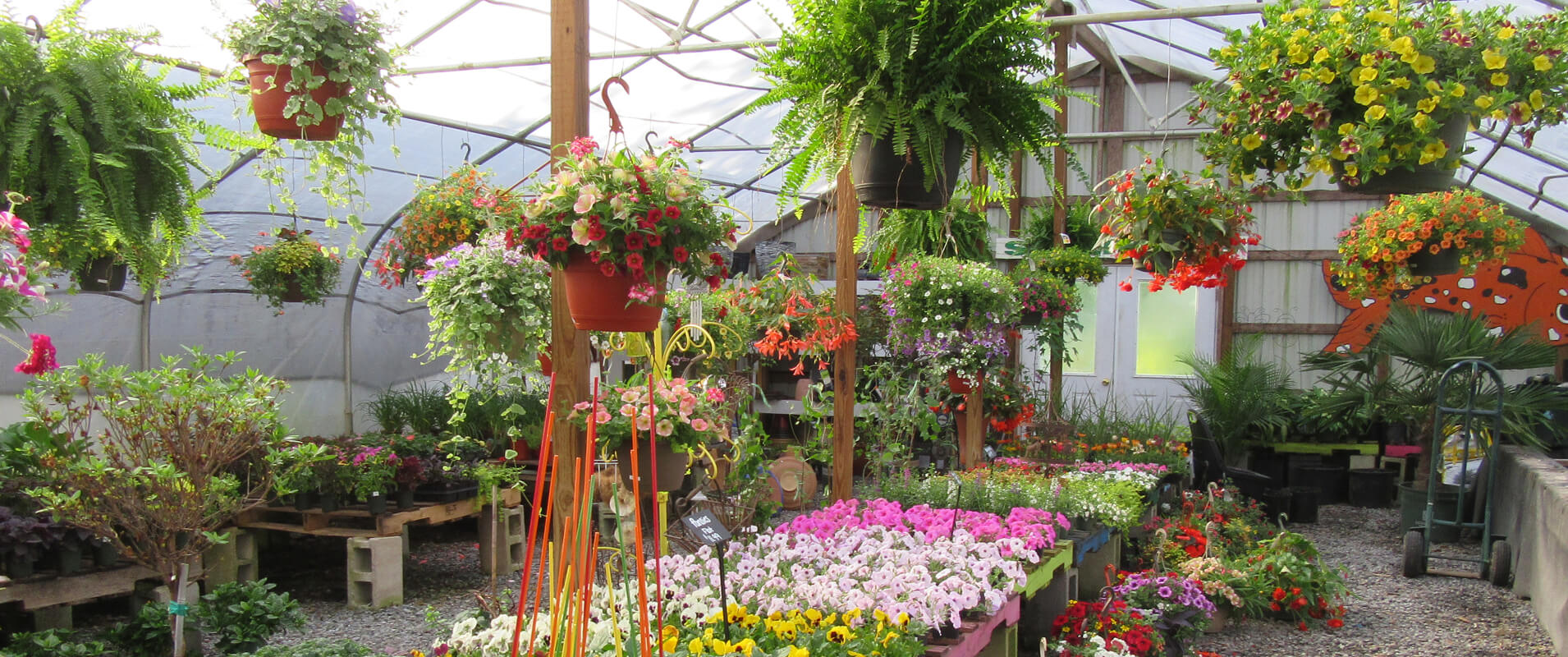 Visit our Greenhouse
